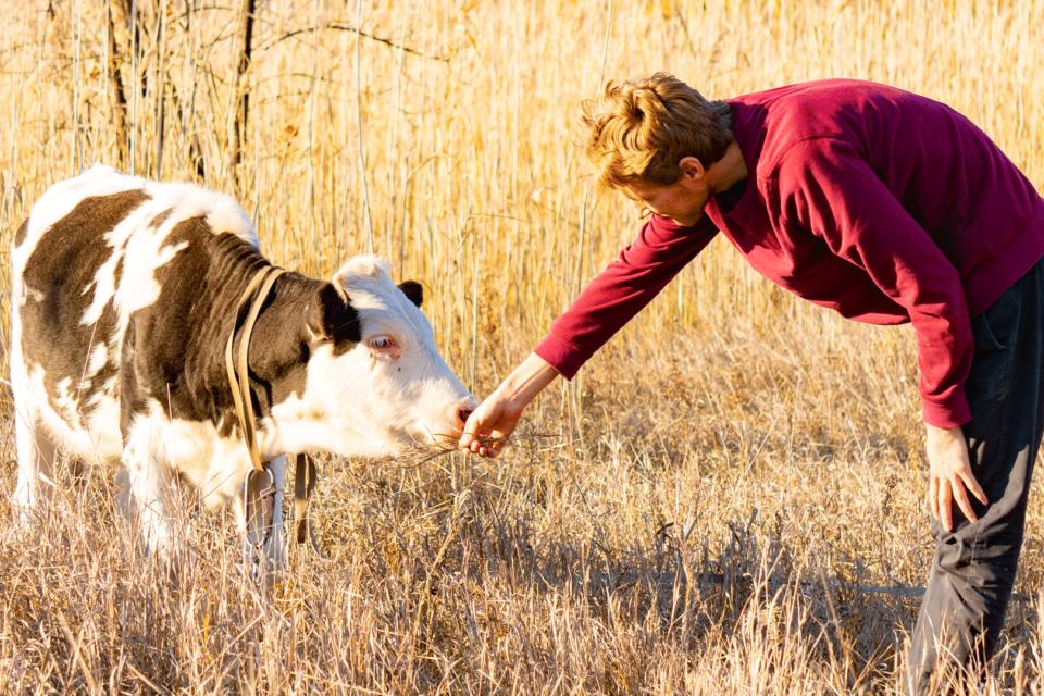 Jam prap çobani,nuk vlen miresia e nuseve kur e prishin me goje gjdo gje,ato jane si lopa ime qe...